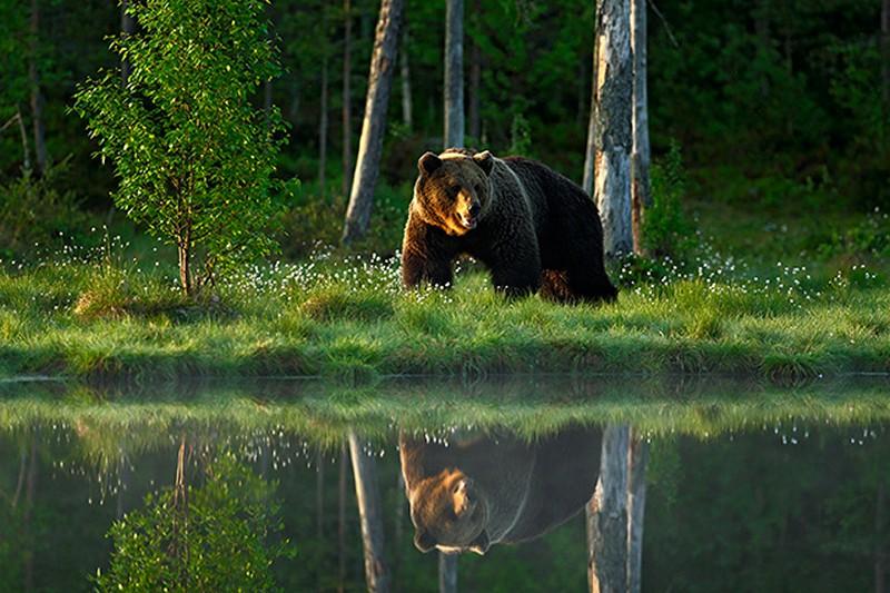 Tranh tường phong cảnh 3D về thiên nhiên hoang dã - Mã: TH-1312