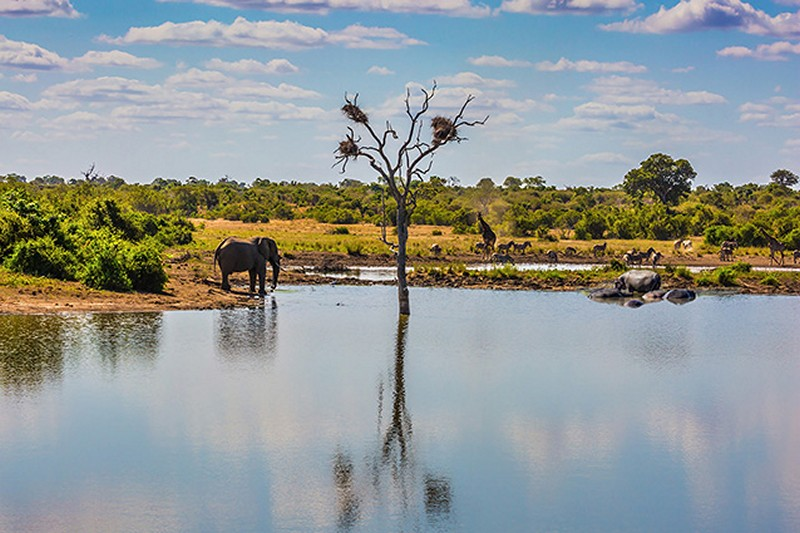 Tranh tường phong cảnh 3D về thiên nhiên hoang dã - Mã: TH-1315