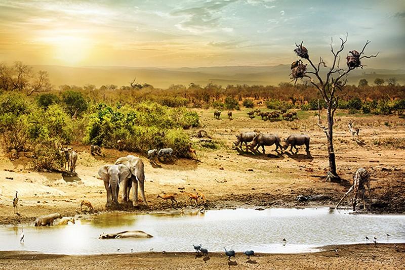 Tranh tường phong cảnh 3D về thiên nhiên hoang dã - Mã: TH-1327