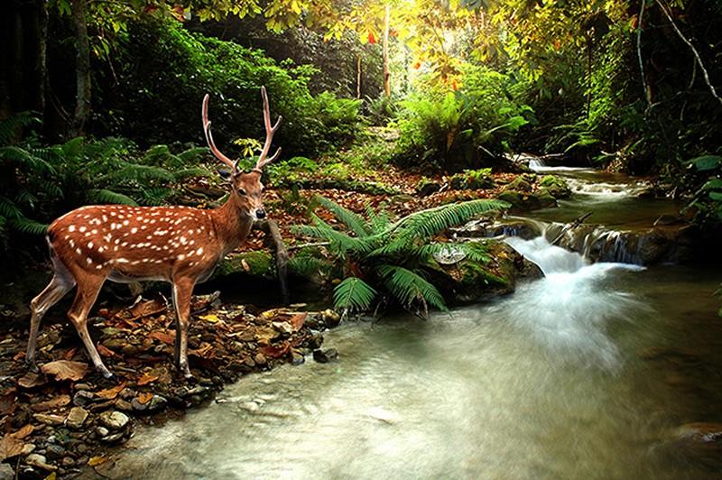 Tranh tường phong cảnh 3D về thiên nhiên hoang dã - Mã: TH-1284