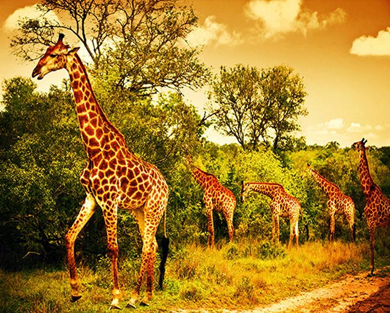 Tranh tường phong cảnh 3D về thiên nhiên hoang dã - Mã: TH-1286