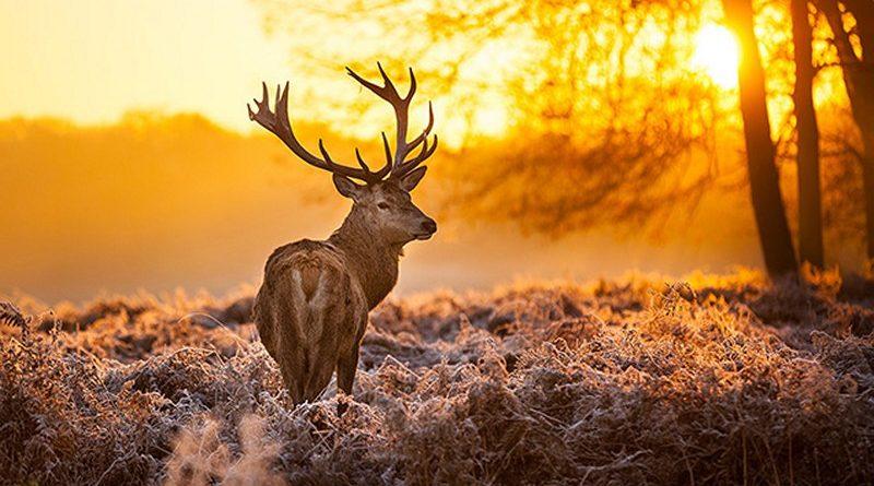 13 mẫu tranh tường phong cảnh 3D đẹp nhất về thiên nhiên hoang dã