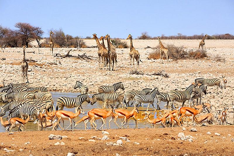 Tranh tường phong cảnh 3D về thiên nhiên hoang dã - Mã: TH-1296