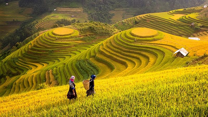Tranh đồng quê 3D - Tổng hợp các mẫu tranh đồng quê Việt Nam đẹp nhất