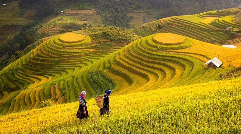 7 mẫu tranh phong cảnh làng quê đơn giản đẹp nhất- Làng quê Việt Nam