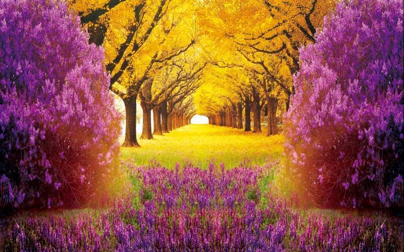 Tranh phong cảnh 3d đẹp lung linh: mẫu in tranh TH_05695