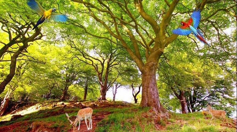 25 mẫu tranh 3d phong cảnh thiên nhiên tuyệt đẹp, tốt cho phong thủy