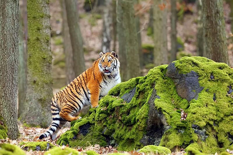 Tranh 3d phong cảnh thiên nhiên hoang dã - 07