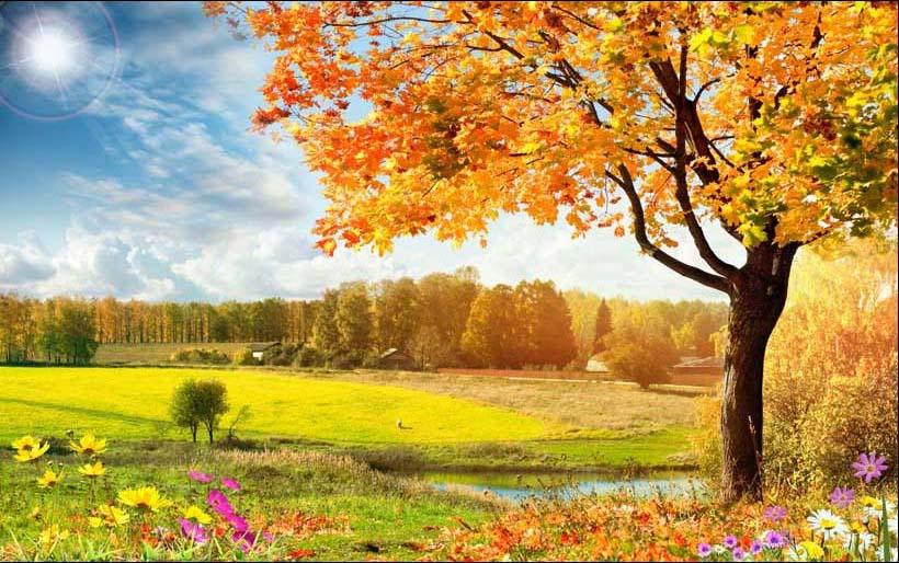 Mẫu tranh phong cảnh mùa thu đẹp lung linh, Mẫu in: TH_06394