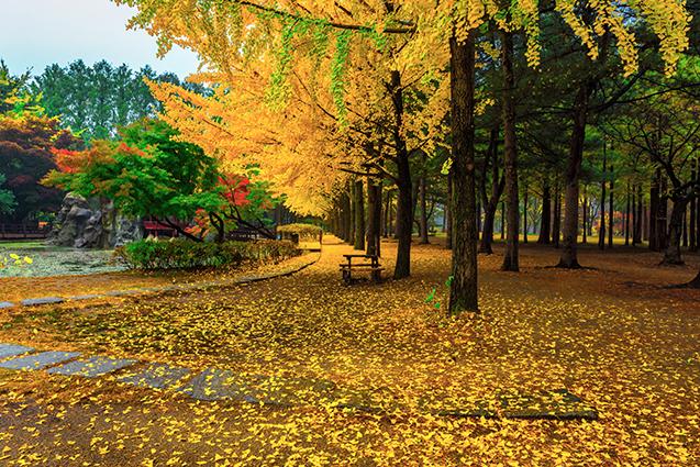Mẫu in tranh 3D phong cảnh, mã in: Nami island in autumn of Korea.