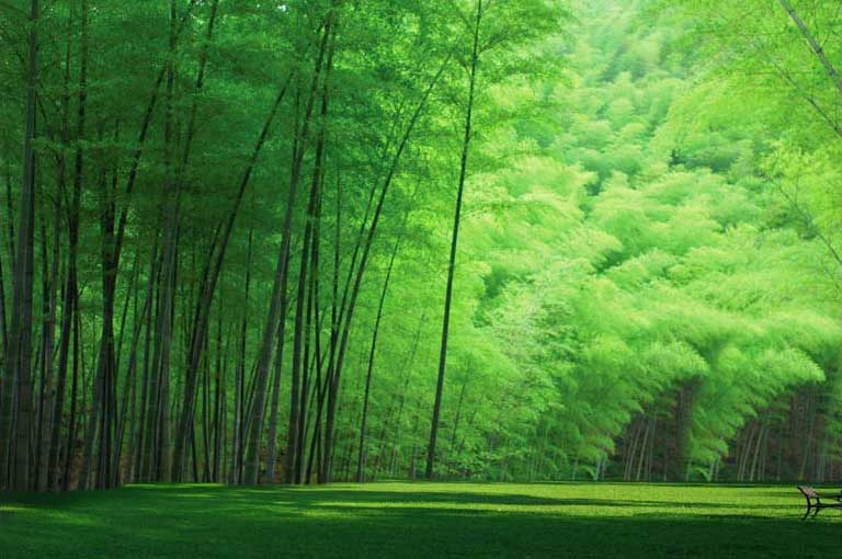 Tranh treo tường phòng khách chủ đề phong cảnh - 02