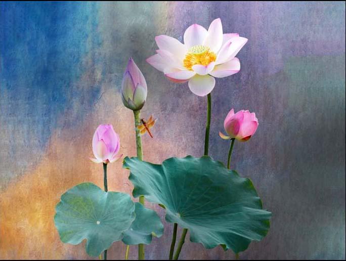 Tranh sơn dầu 3D của Thiên Hà đẹp không kém tranh vẽ (mẫu in TH_09965)