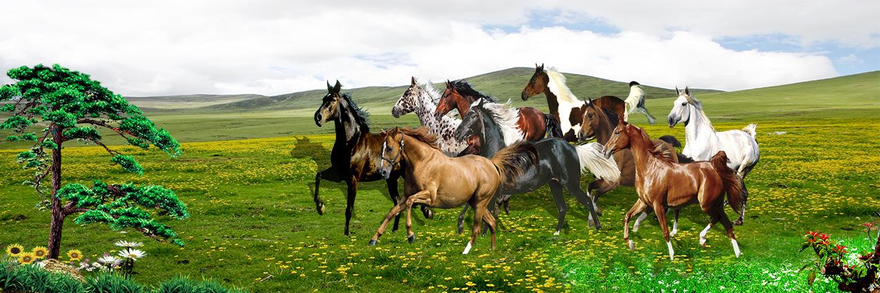 Mẫu tranh dán tường 3d khổ lớn - tranh ngựa mang lại may mắn bình yên cho gia chủ (Mẫu in tranh zth0330-copy)