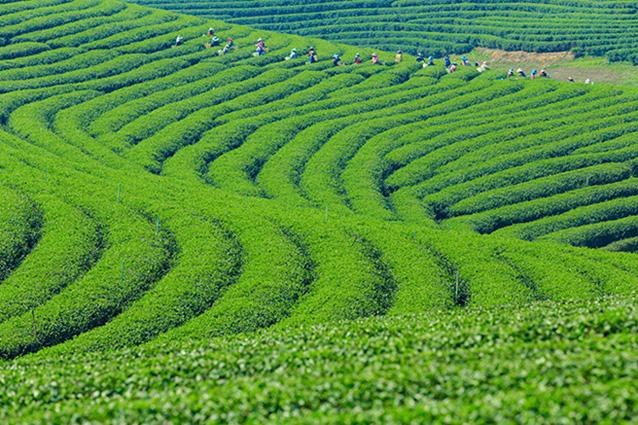 Trang phong cảnh đồng quê tuyệt đẹp: mã in TH-58P-005129