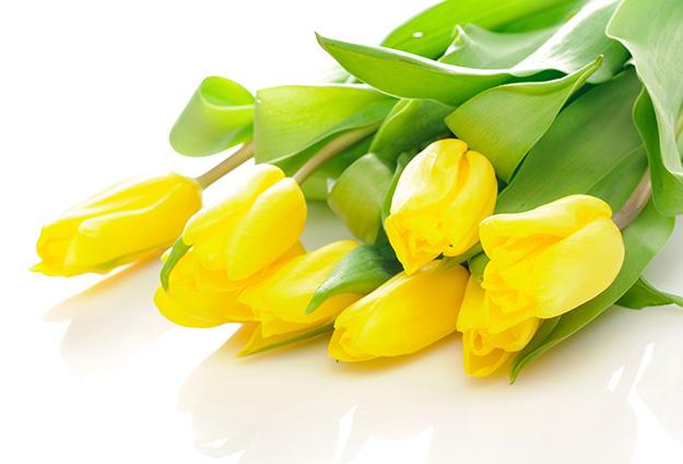 Bouquet of the fresh tulips over white  - 8727 mẫu tranh 3d hiện đại – xưởng in tranh 3d Thiên Hà