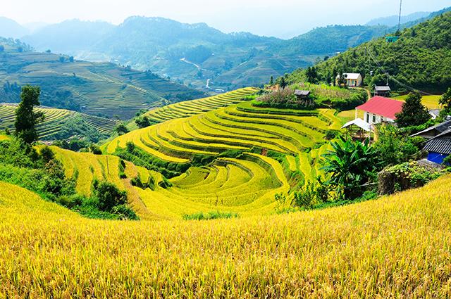 Tranh phong cảnh đồng quê giản dị mà đẹp đến nao lòng