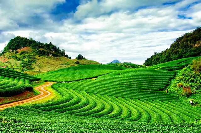 Những mẫu tranh phong cảnh 3d đẹp nhất: mẫu: Tea hills in Moc Chau highland, Son La province in Vietnam