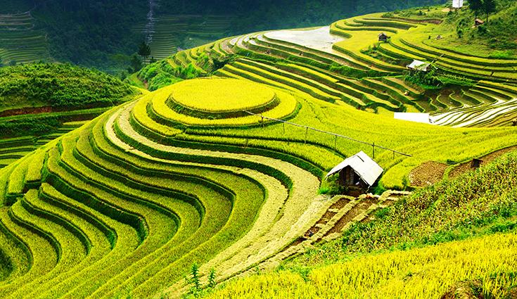 Trang phong cảnh đồng quê tuyệt đẹp: mã in THS_0744