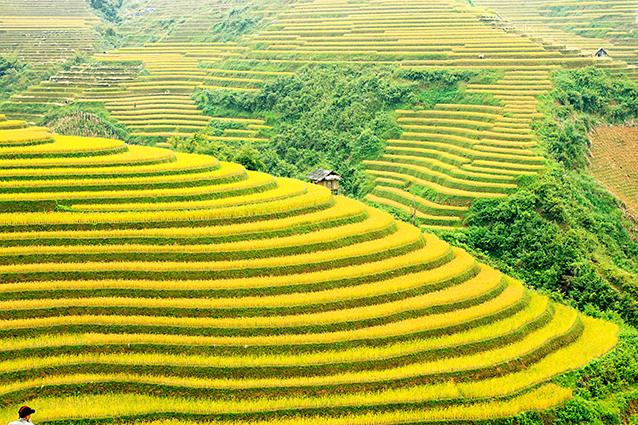 THS_1040 - Tranh 3d phong cảnh làng quê đẹp nhất 2019
