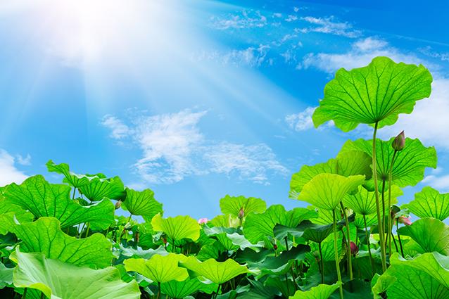 Trang phong cảnh đồng quê tuyệt đẹp: mã in THS_1042