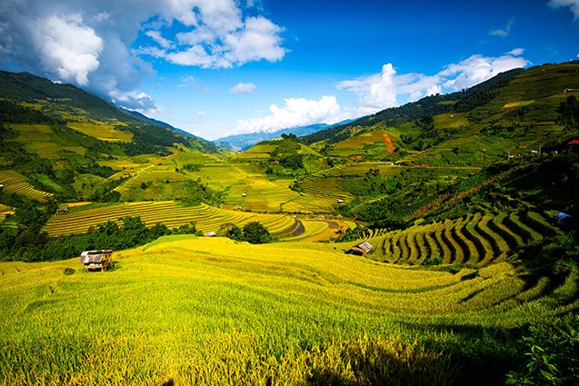 THS_1069 - Tranh 3d phong cảnh làng quê đẹp nhất 2019