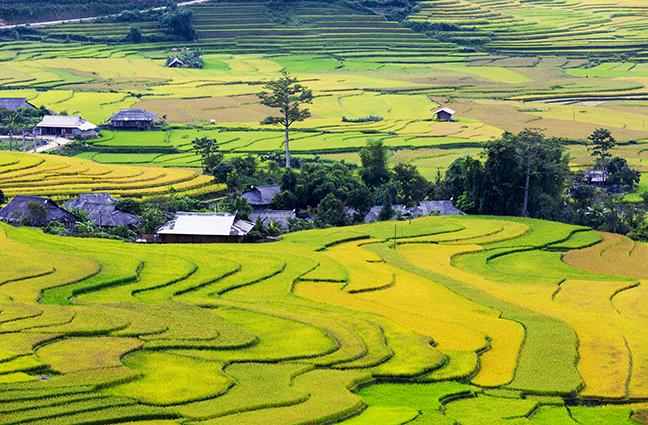 Tranh phong cảnh đồng quê giản dị mà đẹp đến nao lòng: mẫu in THS_1073