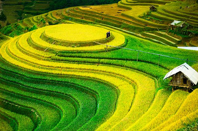 Tranh phong cảnh quê hương đẹp nhất: mã in THS_1295
