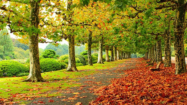 TH-58P-005278- 10 mẫu tranh phong cảnh mùa thu đẹp nhất thế giới