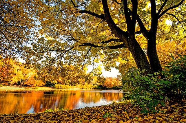 Goldener Herbst mit ruhigem See im Park :)- 10 mẫu tranh phong cảnh mùa thu đẹp nhất thế giới