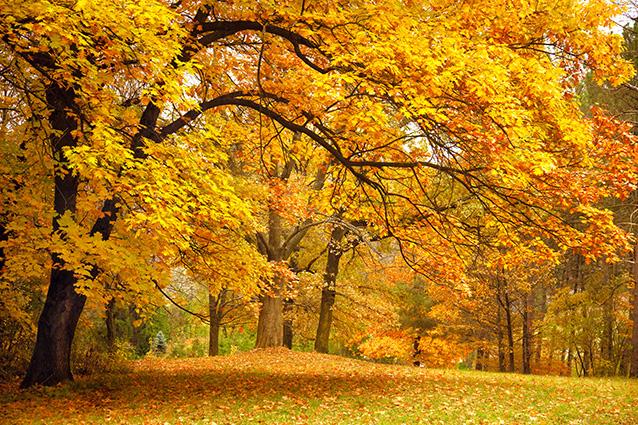 TH-58P-00934-copy- 10 mẫu tranh phong cảnh mùa thu đẹp nhất thế giới