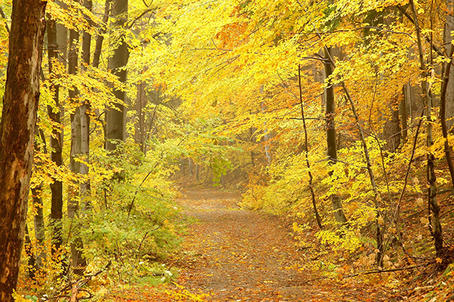 TH-58P-01072-copy- 10 mẫu tranh phong cảnh mùa thu đẹp nhất thế giới