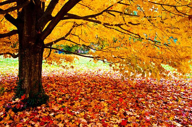 TH-58P-01114-copy- 10 mẫu tranh phong cảnh mùa thu đẹp nhất thế giới