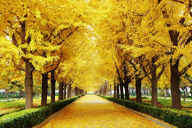 TH-58P-01285-copy- 10 mẫu tranh phong cảnh mùa thu đẹp nhất thế giới