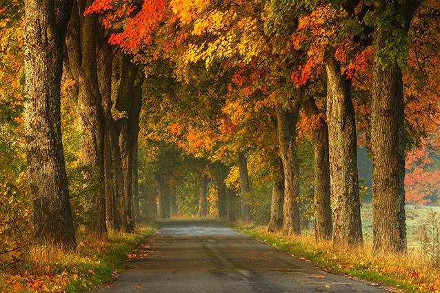 THS_1057- 10 mẫu tranh phong cảnh mùa thu đẹp nhất thế giới