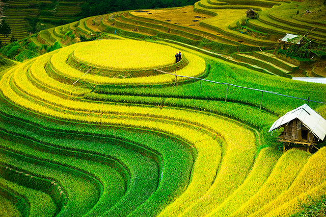 THS_1295 - Mẫu tranh phong cảnh mùa thu đẹp nhất thế giới