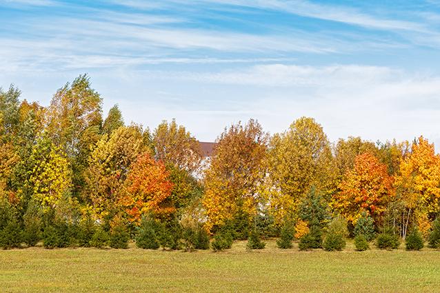 THS_1355- 10 mẫu tranh phong cảnh mùa thu đẹp nhất thế giới