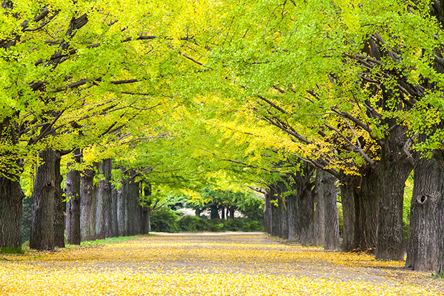 THS_1635- 10 mẫu tranh phong cảnh mùa thu đẹp nhất thế giớiTHS_1635- 10 mẫu tranh phong cảnh mùa thu đẹp nhất thế giới