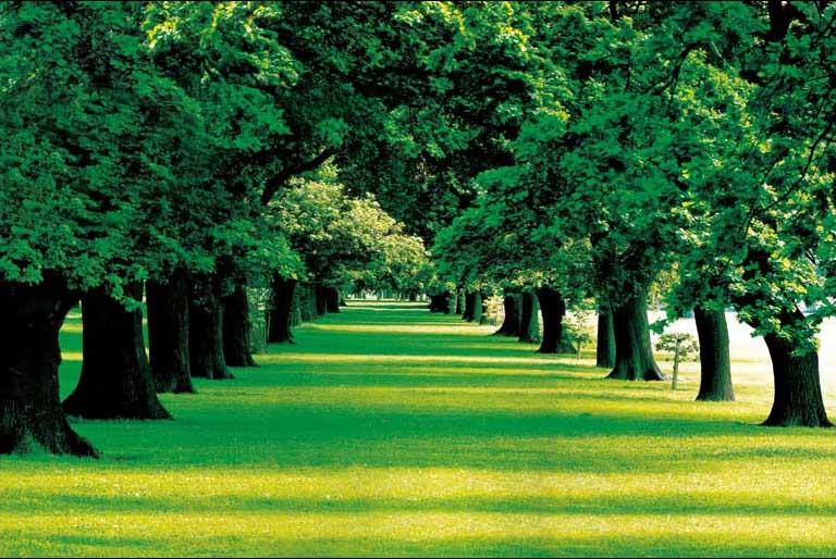 Mẫu tranh phong cảnh dán tường phòng khách tuyệt đẹp: mã in TH_05050