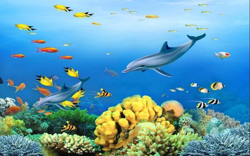 TH_09704 - Những mẫu tranh cảnh biển 3d đẹp khó cưỡng tại xưởng in Thiên Hà