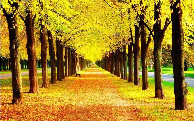 TH_11131 - Mẫu tranh phong cảnh mùa thu đẹp nhất thế giới