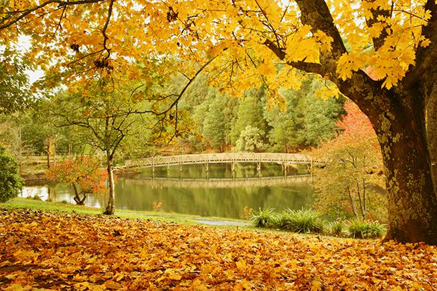 Tranh phong cảnh thiên nhiên đẹp và nên chọn cho phòng ngủ - mẫu in THS_0090