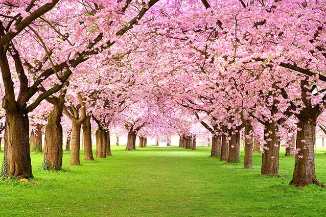 Mẫu tranh 3d phong cảnh mùa xuân đẹp ngỡ ngàng chào xuân 2020 - TH-58P-01324-copy