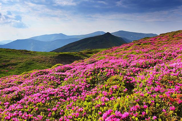 Tranh 3d phong cảnh mùa xuân mang đến nguồn cảm hứng bất tận cho ngôi nhà bạn - TH-58P-01708-copy
