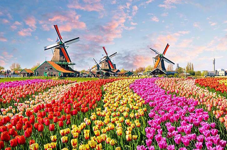 Tranh 3d phong cảnh mùa xuân mang đến nguồn cảm hứng bất tận cho ngôi nhà bạn - TH_25938